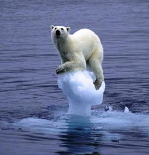 Melting-ice-polar-bear